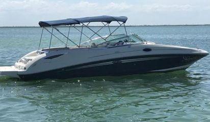 Speedboat Sea Ray 300 Sundeck (2021)
